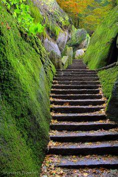 secret gardens, stone steps, stairway, pathway, franciscan path