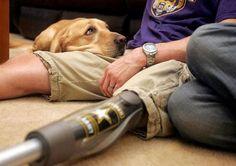 These military/dog photos tug at my heart.