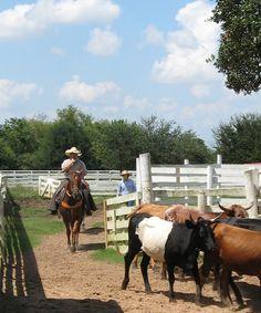 George Ranch Historical Park #horses #Houston #Texas