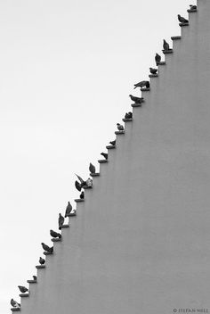 Pigeons on the stairs by Stepan Holl
