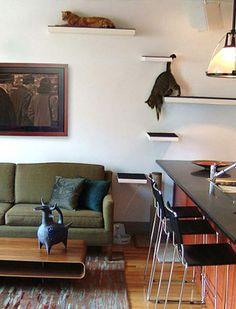 DIY Cat climbing/perching   http://www.moderncat.net/2007/08/22/modern-cat-shelves-at-pet-decor-contest/ #cats #CatShelves