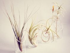 Tall Air Plant and Floating Vase // Modern Cute by PetitBeast, $16.00