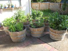 66 Things You Can Grow At Home: In Containers, Without a Garden