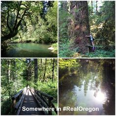 The Delta Old Growth Grove Nature Trail is a scenic 0.50 mile hike through giant Douglas firs and Western red cedars, some over 180 feet tall. #RealOregon