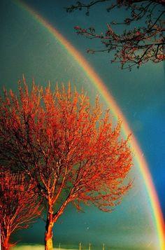 Atumns Glow god, tree, color, rainbows, blue skies, fall autumn, natur, beauti, photographi