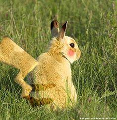 Wild Pikachu
