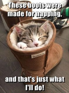 These boots were made for napping, and that's just what I'll do! #catoftheday