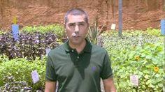 Faça um repelente caseiro contra pragas do jardim, via YouTube.