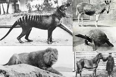 Un vistazo a lo que hemos perdido: 10 animales extintos (Parte 1)