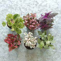 Terrain Terrarium Plant Collection