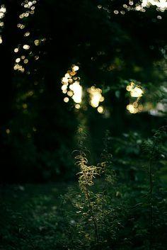 glisten in that light