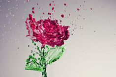 water, splash, art photography, iphon case, food coloring, roses, inspir, flowers, photographi