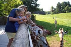 10 Ways to Go Wild with a Trip to the Zoo in Michigan