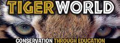Rockwell, NC - tiger world