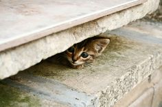 Hide and go seek: found you!