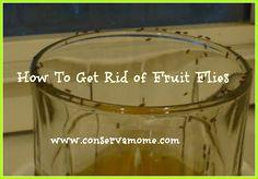 Naturally get rid of fruit flies!