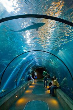 Oregon Coast Aquarium, Newport, Oregon. I slept in this tube once on a girl scout field trip!