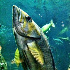Vancouver Aquarium friend