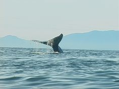 On my list... Humpback Whale Sitka, Alaska