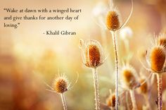 Wake at dawn with a winged heart, and give thanks for another day of loving. - Khalil Gibran