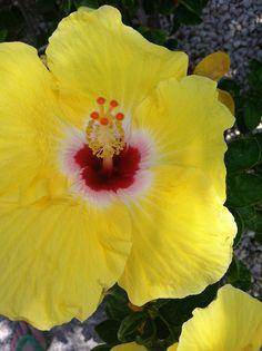Lovely flowers in Playa del Carmen.
