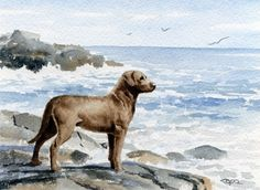 CHESAPEAKE BAY RETRIEVER Dog Watercolor Signed by k9artgallery   WATERCOLOR