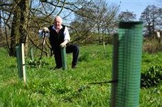 FREE trees will soon be avaliable for community groups in Ashbourne.