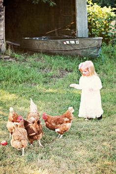 Little farm girl and chickens