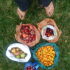 Falling Fruit. A great website/map that shows where you can do some urban foraging worldwide
