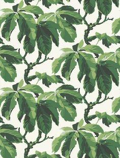 fig leaf tree wallpaper pattern // Boråstapeter Oxford (1222)