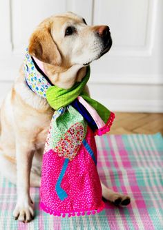 @Kate Baldwin - I imagine you doing this to your dog, Kate : ) fashion scarves, colors, dress up, pet photos, baby dogs, yellow, puppi, labrador retrievers, friend