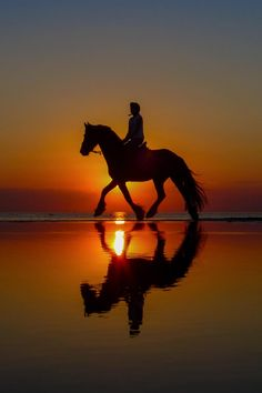 Horse ride in the sunset