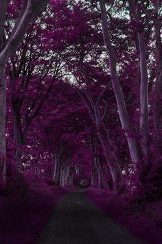 Purple Forest, Scotland photo via viktor