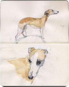 Another whippet