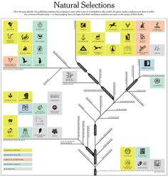Natural Selection diagram (process/flow chart)