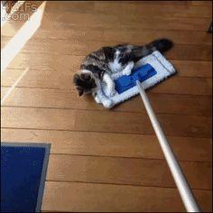 All aboard the kitty swiffer ride!