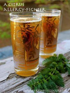 allergi, nettl tea, nettle tea, herb, drink, tea recipes