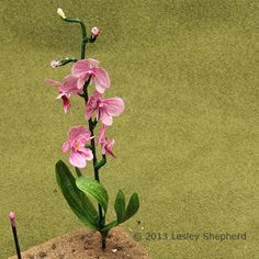 Tutorial for phalaenopsis orchid 1:12 on miniatures.about.com