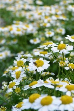 BLEN- aromaterapia