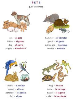 FREE 30 page worksheet packet -- Los Animales!  PrintableSpanish.com