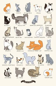 Cute cat illustration poster