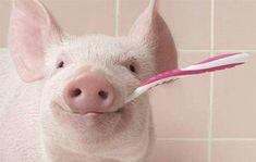 Pigs.. lol!
