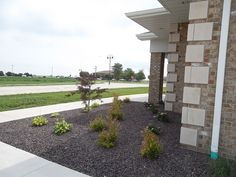 Commercial landscape design/ Dwarf Japanese Laceleaf Maple Tree/ Hydrangea/ Abelia/ Hosta's