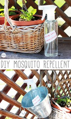 Make Your Own Natural Mosquito Repellent - One Good Thing by Jillee