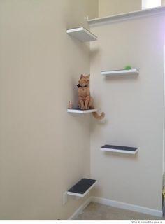 DIY cat perch. Cool!!