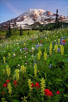 Mt. Rainier, Washington. I spent one of the greatest days of my life hiking sister mountains with my brother.