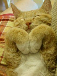 aww snuggles