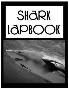 Connections ~ Oceans Unit Study, Lesson Plans, Printables, Lapbooks lap book, unit studi, lapbook