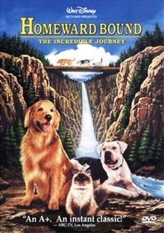 Homeward Bound: The Incredible Journey -- Two dogs and a cat set out across America to find their owners.