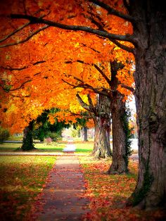 canopi, fall leaves, autumn leaves, color, fall shoes, fall time, orange weddings, fall weddings, fall trees